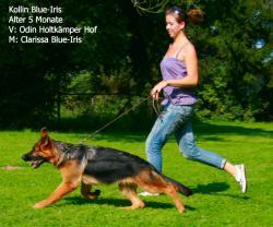 Kollin Blue Iris nach Clarissa Blue Iris und Odin Holtkaemper Hof  in Bewegung