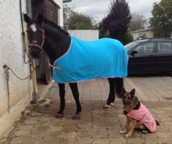 Jill's Lieblinge :-)  Athena & Ilonka Blue-Iris