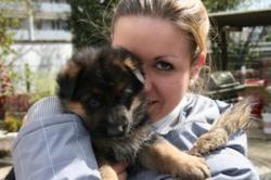 Welpen nach Elischa Blue-Iris und Mentos vom Osterberger Land 4 Wochen alt