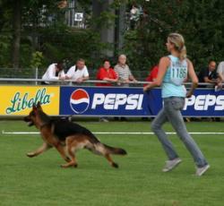 Kimberly mit Konan Standmusterung schnelle Runde BSZS 2009